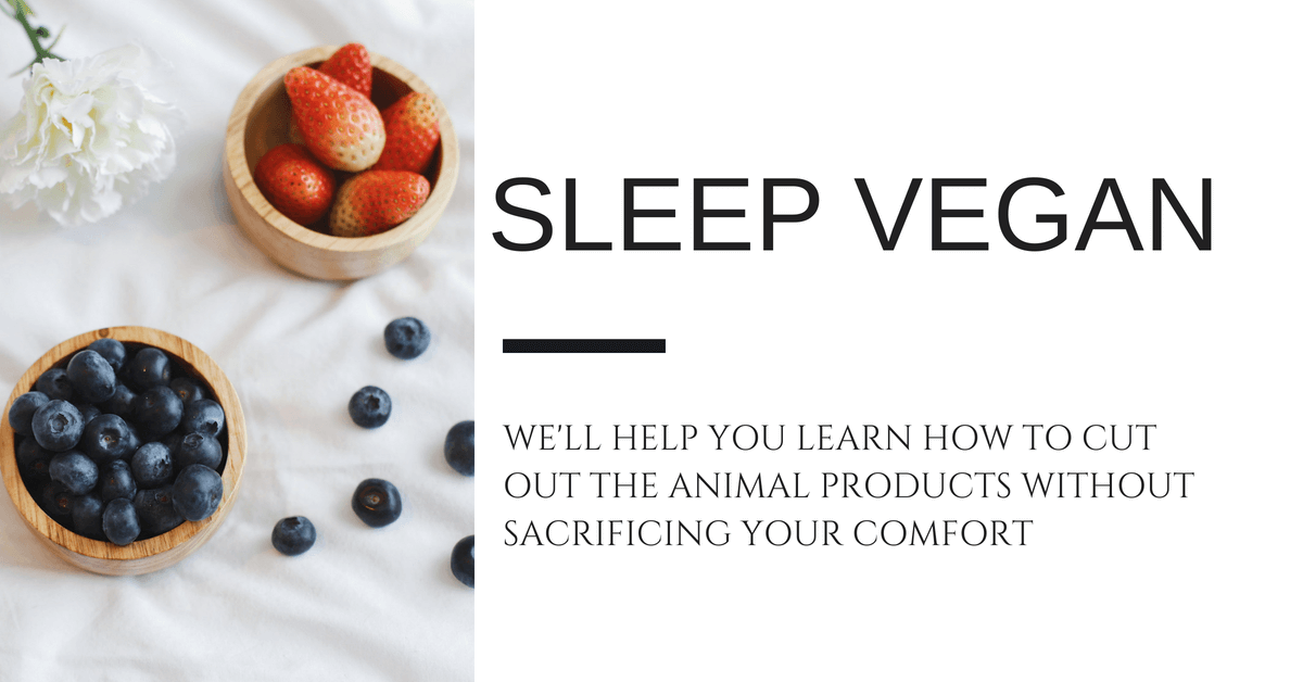 Sleep Vegan Blog Header