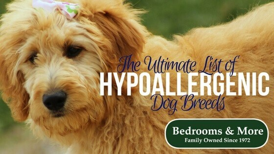 Hypoallergenic Dog Breeds Blog title