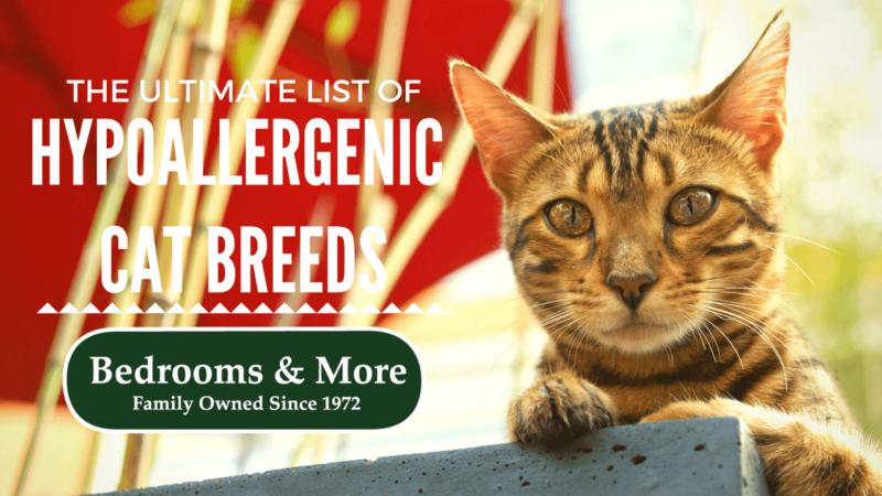 HYPOALLERGENIC CAT LIST