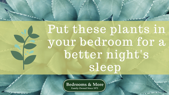 Plants in your bedroom to help you sleep